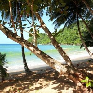 16 dage på Tobago